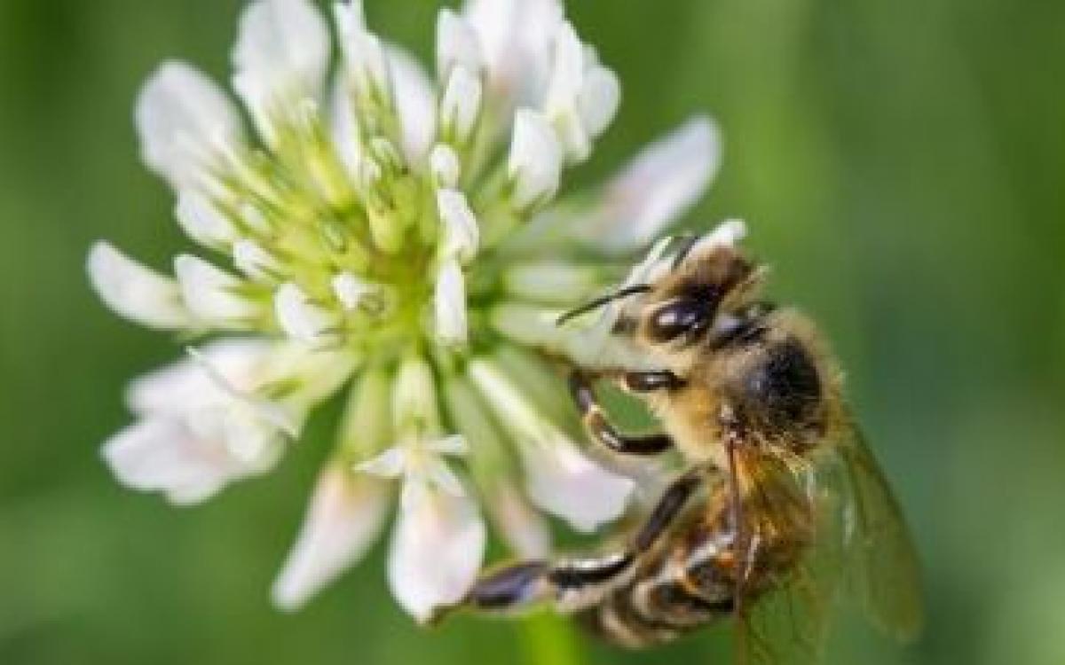 Les pollinisateurs dans la production horticole